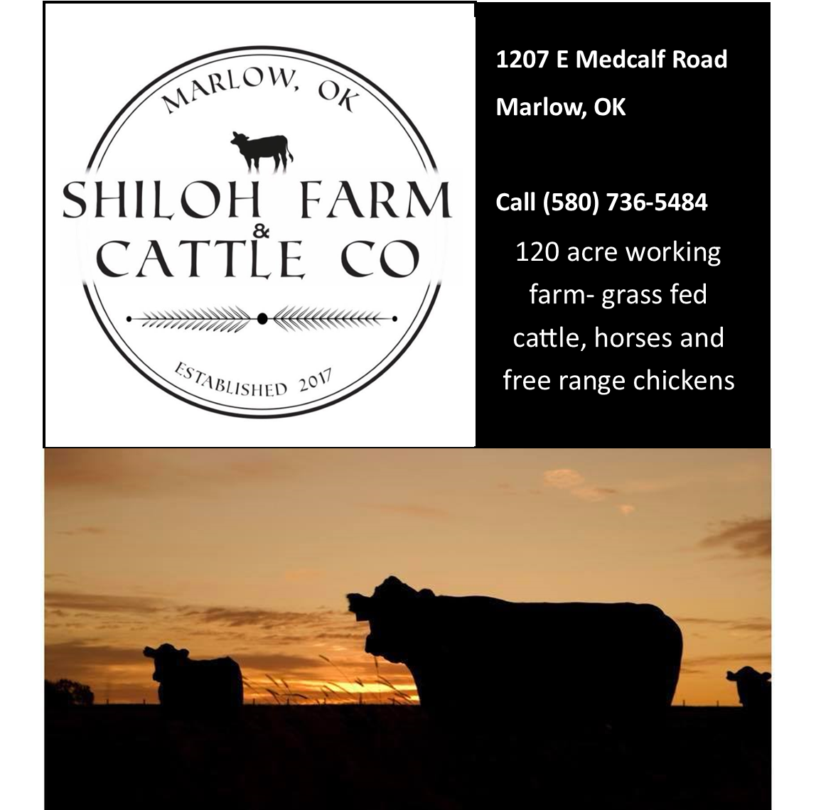 Shiloh Farm and Cattle Company.jpg
